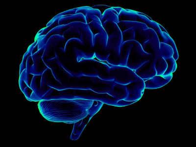P0U1F1_el_cerebro