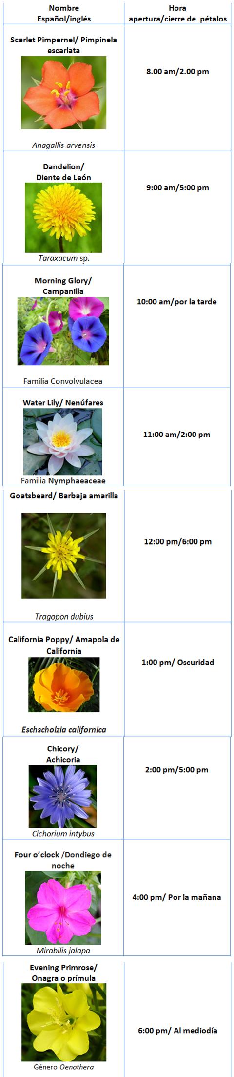 tabla-flores